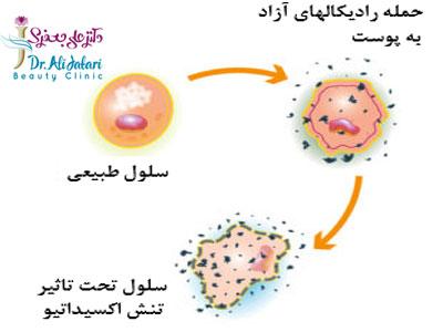 رادیکال های آزاد پوست