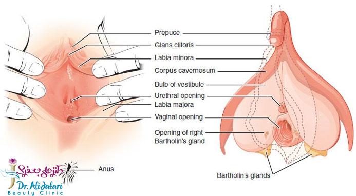 ساختار واژن